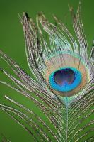 pearl's Avatar